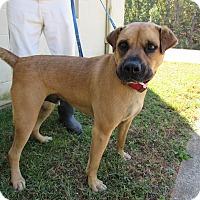 Adopt A Pet :: 16D-1615 (10/27) - Rome, GA