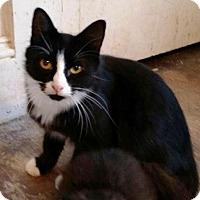 Domestic Longhair Cat for adoption in Putnam, Connecticut - Jean