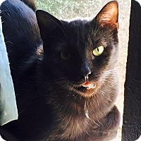 Adopt A Pet :: Chunk - McKinney, TX