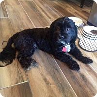 Adopt A Pet :: COOPER 4 - Chandler, AZ