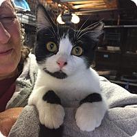 Adopt A Pet :: Trudy - Lombard, IL