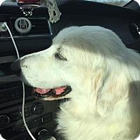 Adopt A Pet :: HollyAlso - Garland, TX