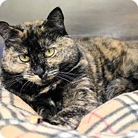 Adopt A Pet :: Emma - Paris, ME