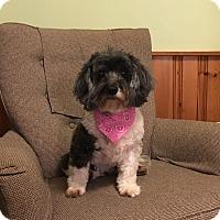 Adopt A Pet :: Libby - Sharon Center, OH