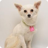 Adopt A Pet :: Miss Tickle - Santa Cruz, CA