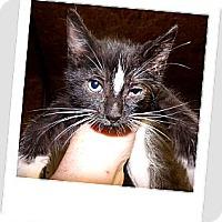 Adopt A Pet :: Jasper - Owosso, MI
