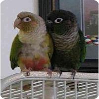 Adopt A Pet :: Kohdi & Loki - Salt Lake City, UT