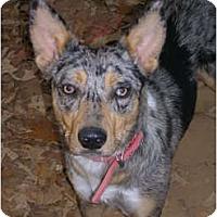 Adopt A Pet :: Luckygirl - Glastonbury, CT