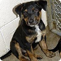Adopt A Pet :: Bob - Middletown, RI
