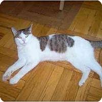 Adopt A Pet :: Joey - Jamaica, NY
