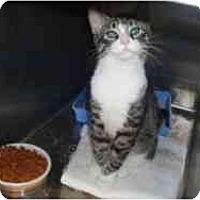 Adopt A Pet :: Bandit - Hamburg, NY