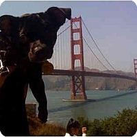Adopt A Pet :: Gerry - San Francisco, CA