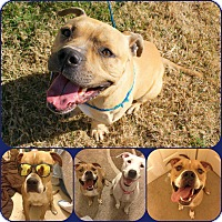 Adopt A Pet :: Caesar - Yuba City, CA
