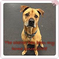 Adopt A Pet :: Roscoe - Jupiter, FL