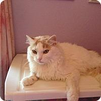 Adopt A Pet :: Vincent - Mesa, AZ