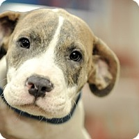 Adopt A Pet :: Ted - Gainesville, FL