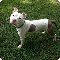 Adopt A Pet :: Bingi - Greensboro, GA