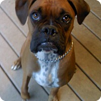 Adopt A Pet :: (CL) Bailey & Clancy - Brentwood, TN