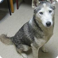 Adopt A Pet :: Reba - Gary, IN