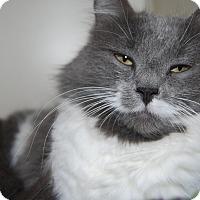 Adopt A Pet :: Jewel - Ridgway, CO