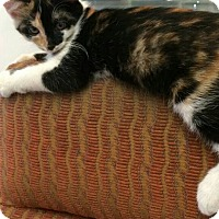 Adopt A Pet :: Katie - Middletown, OH