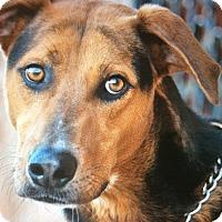 Adopt A Pet :: AUSTIN VON AUGSBURG - Los Angeles, CA