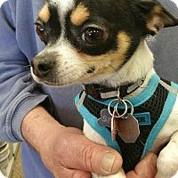 Adopt A Pet :: Sport - Ogden, UT
