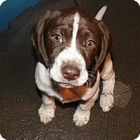 Adopt A Pet :: Gabby - mooresville, IN