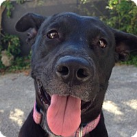 Adopt A Pet :: Bella - Ocean Ridge, FL