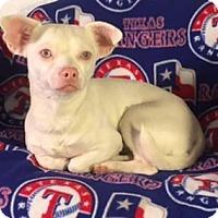 Adopt A Pet :: Casper - Special Needs - Dallas, TX