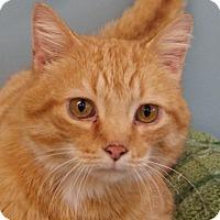 Adopt A Pet :: Levi - Monroe, MI