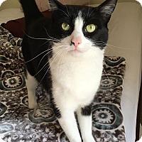 Adopt A Pet :: RUBY! - Philadelphia, PA