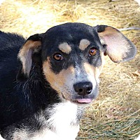 Adopt A Pet :: Madison - Westminster, CO
