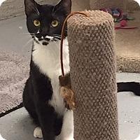 Adopt A Pet :: Zia - San Leon, TX