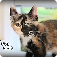 Adopt A Pet :: Tess - Glen Mills, PA
