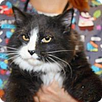 Adopt A Pet :: Cooper - Wildomar, CA