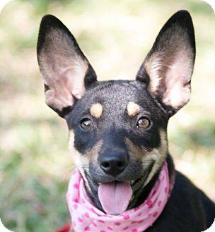 Shepherd (Unknown Type)/Terrier (Unknown Type, Medium) Mix Dog for adoption in San Ramon, California - Ruth