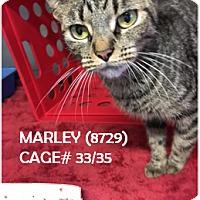 Adopt A Pet :: MARLEY - Flint, MI
