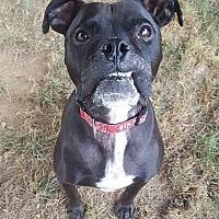 Adopt A Pet :: Fancee - Westminster, MD