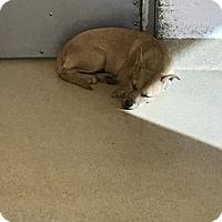 Adopt A Pet :: Marion - Miami, FL