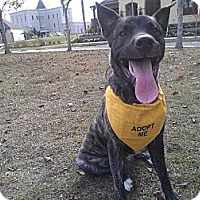 Adopt A Pet :: Saint - New Orleans, LA