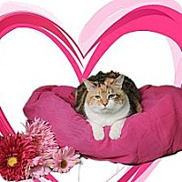 Adopt A Pet :: Callie M - Chesapeake, VA