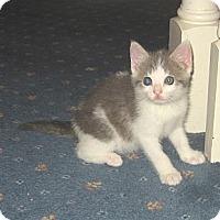 Adopt A Pet :: JESSICA - 2013 - Hamilton, NJ