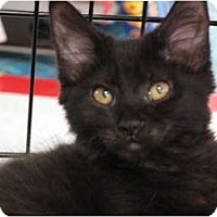 Adopt A Pet :: Avielle - Port Republic, MD
