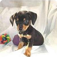Adopt A Pet :: Devin - Mooy, AL