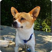 Adopt A Pet :: Gary - Pending - Vancouver, BC