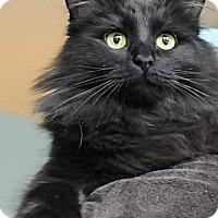 Adopt A Pet :: Topaz - Columbus, OH