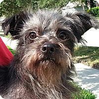 Adopt A Pet :: Jimbo - Orlando, FL