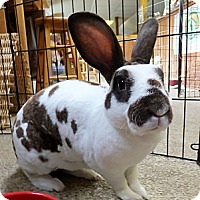Adopt A Pet :: Oakley - Foster, RI