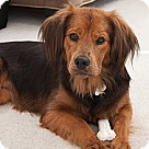 Adopt A Pet :: Klara